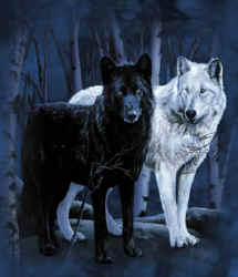 File:White Wolf Black Wolf.jpeg
