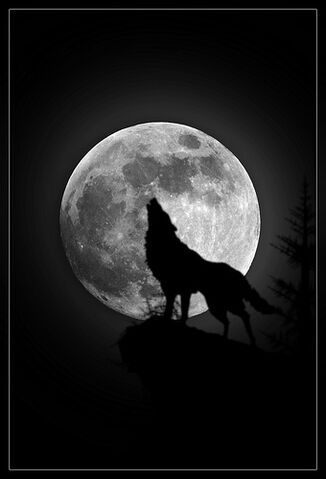 File:Lonely Wolf.jpg