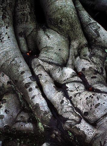 File:Tree roots.jpg