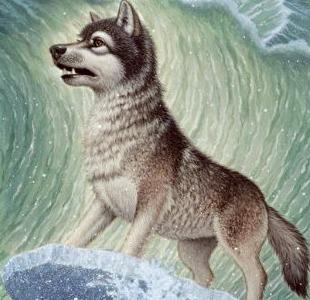 File:Wolf 2312.jpg