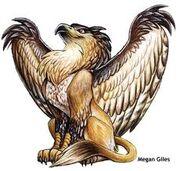 Golden Griffin Sarukawa