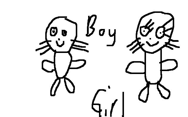 File:Gender Of Seals.jpg