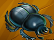 Collection-Scarab
