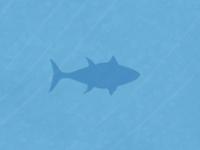 Bluefintuna shape