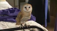 Cynthia Horrocks owl