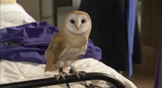 File:Cynthia Horrocks owl.png