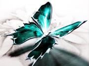 LyrasButterfly