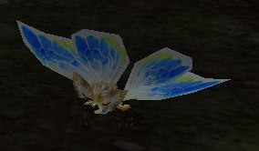 Image of Forest Moth