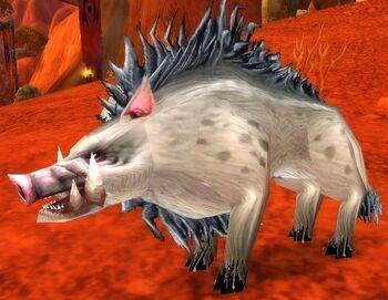 Mottled Boar