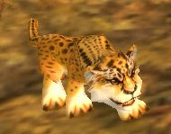 Image of Cheetah Cub