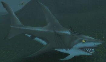 Mammoth Shark