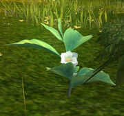 GreenTeaLeaf