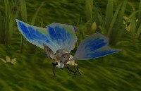 Image of Amber Moth
