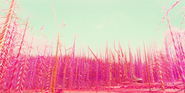 Sugar Rush Candy Cane Forest 01