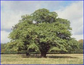 Foundtree