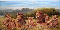 The Lions of Kubwa Pride