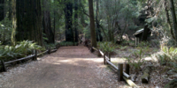 Armstrong Woods 3