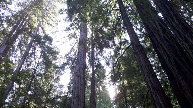 File:Woods5.png
