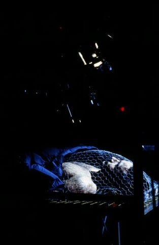 File:David Duchovny filming chicken-wire scene.jpg