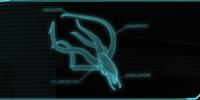 Seeker Autopsy