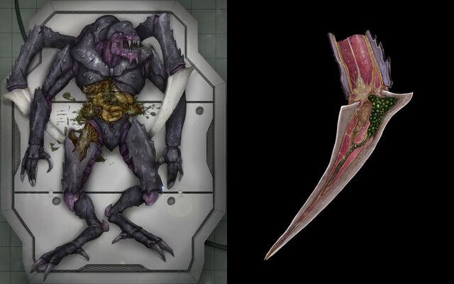 File:Reaperautopsy.jpg