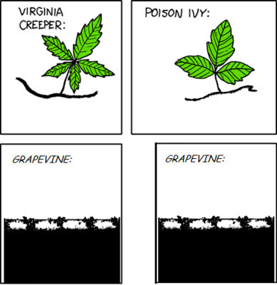 Know your vines 443 SW