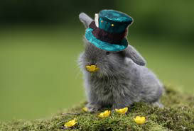 File:Bunny Rabbit w hat.jpg