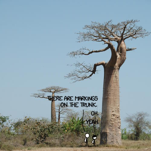 Baobab Markings Frame-1513 riverish demustarded