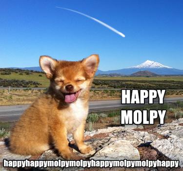 HappyHappyMolpy