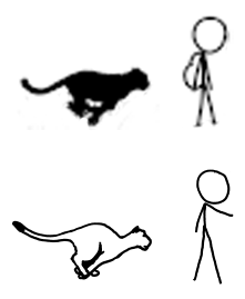RaptorcatComparison