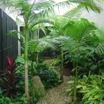 Plants-indoor-gardening-tips-465-150x150