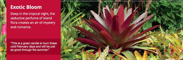 20150328 Exotic Bloom Frag Fam Banner yankeecandle com