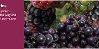 Lush Berries