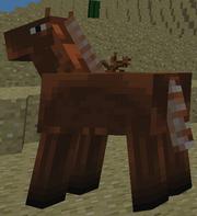 Aa donkey