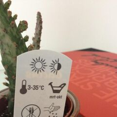 Tom's pet cactus, complete with instructions.
