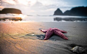 Starfish-pink-on-the-beach-land-715066