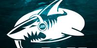 Bass Shark