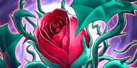 Tentacoli di Rosa
