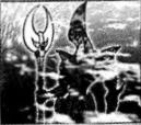 File:ElementalHEROOcean-JP-Manga-GX-CA.png
