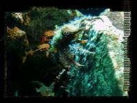 Depths aquarium