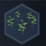Plant 30