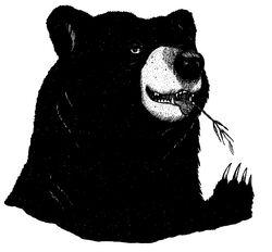 Tallen the Bear