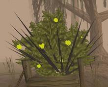 Thron bush