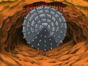 Small intestine drill