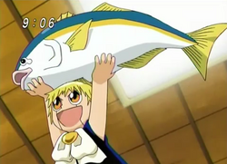 Zatch Holding Yellowtail