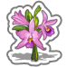 File:Garden Orchids-icon.png