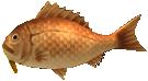 File:Majora's Mask 3D Fish Dancing Sea Bream (Ocean Fishing Hole).png