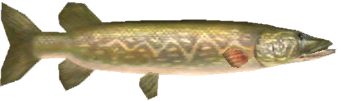 File:Hylian Pike.png