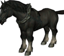 Cheval (Animal)