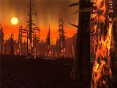 Burning forest.